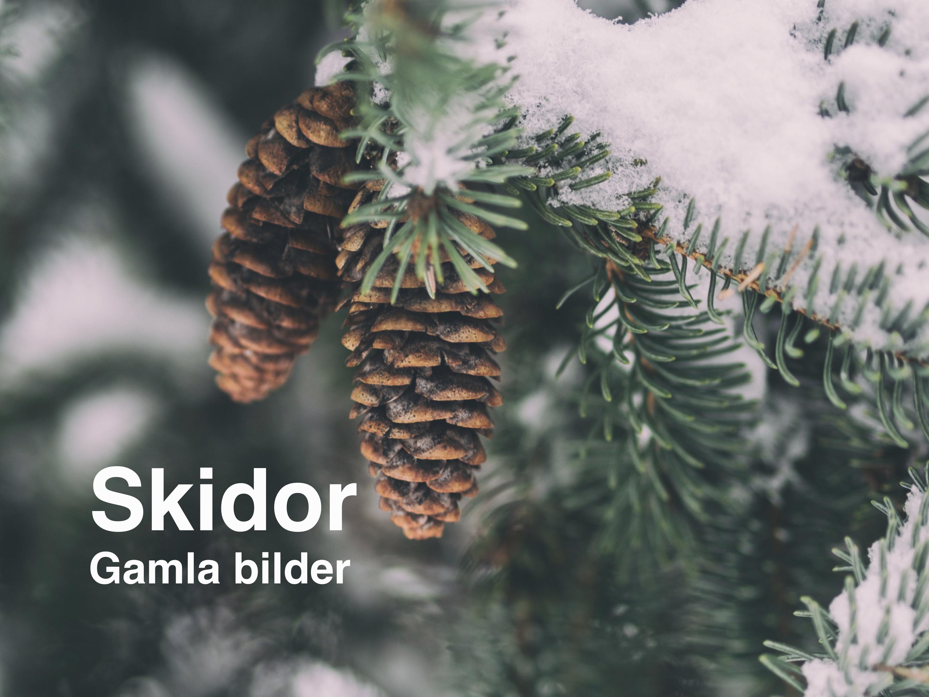 Gamla bilder Skidor
